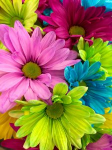 The Effects of Flowers on Human Health