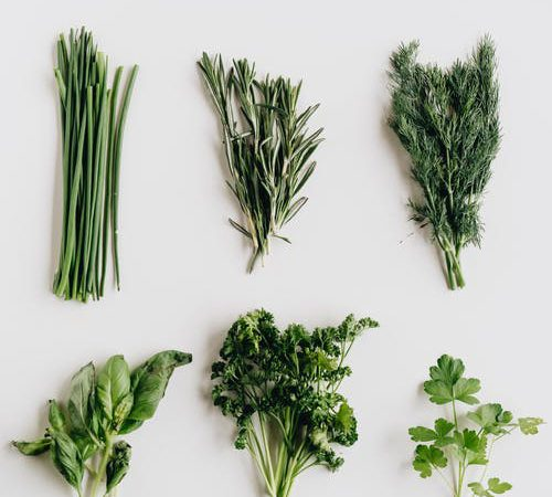 10 Reasons to Include More Fresh Greens in Your Diet